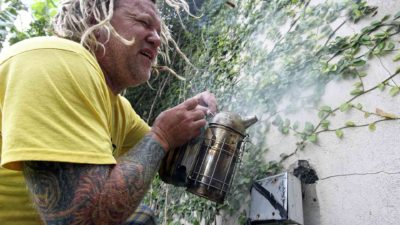 'Bee Czar' comes to the rescue after bees invade neighborhood